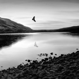 Hawk Flying Over by Eric Demattos - Landscapes Mountains & Hills ( reflection, sunset, rocks, river, hawk, pwc 132: b&w landscapes, black and white, b&w, landscape )