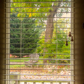 Looking Out My Window by Sandy Friedkin - Buildings & Architecture Other Exteriors ( bench, window, weather, outside, looking out,  )