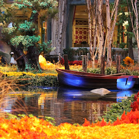 by Aj McGeahy - Novices Only Landscapes ( las vegas, bellagio, colors, boats, fall display )