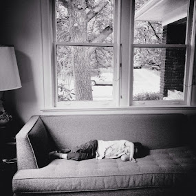 by Jenn Brandt - Babies & Children Child Portraits