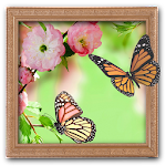 Amazing Photo Frames 1.4 Apk
