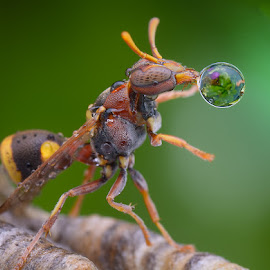 by Kong Chee Seng - Animals Insects & Spiders