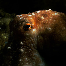 thinking octopus by Adi Drnda - Animals Sea Creatures
