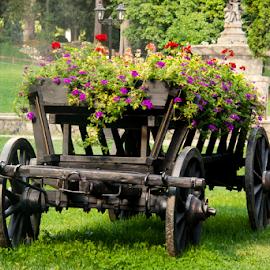 the cart by Mihai  Costea - City,  Street & Park  City Parks ( arrangement, cart, flowers,  )