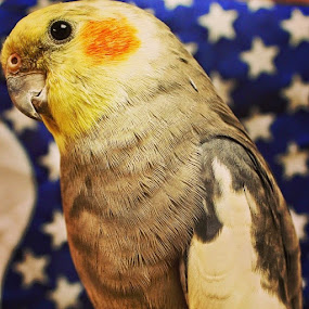 I may look like an eagle, but I can fly happy fourth of july by Rusty Jhorn - Animals Birds