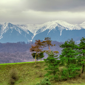 by Costel Ciobanu - Landscapes Mountains & Hills ( tree, view, montain )