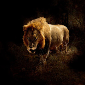 Simba by Bjørn Borge-Lunde - Digital Art Animals ( big cat, lion, nature, wildlife, africa )