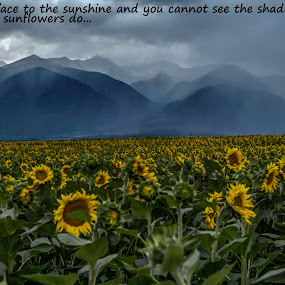 Misty mountains by Stratos Lales - Typography Quotes & Sentences ( clouds, mountain, shadow, sunflowers, misty,  )