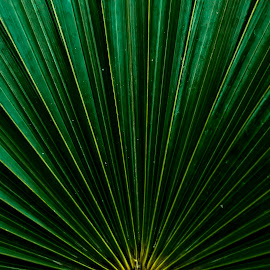 GREEN RAYS by Monish Kumar - Nature Up Close Leaves & Grasses