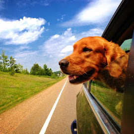 The Ride Home by James Timmer - Animals - Dogs Portraits