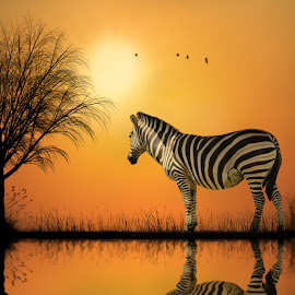 The loneliness of the leader by George Leontaras - Digital Art Animals ( reflection, hellas, greece, horse, fine art, lake, yellow, birds, manipulation, birdsgrass, volos, tree, digital art, glart, zebra )