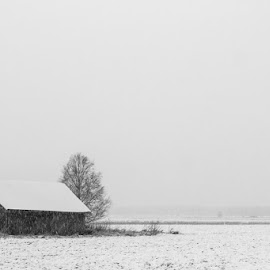 Coldness Of February by Jukka Heinovirta - Landscapes Weather ( black and white, distant, space, sky, barn, tree, nature, snow, idyllic, weather, black, fields, cloudspace, white, forest, beauty in nature, skylight, scenic, barn house, winter, environment, matkaniva, outdoors, rural scene, air, day )
