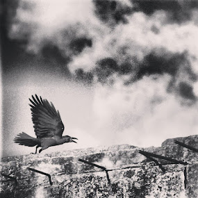 Feni. September 2014 by Shiful Riyadh - Black & White Abstract ( bird, abstract, flying, sky, start, black & white, crow,  )