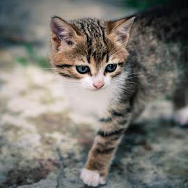 by Aleksandra Papova - Animals - Cats Kittens