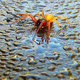 Spider on morning dew with iPhone by Tyrell Heaton - Instagram & Mobile iPhone ( dew, spider, iphone )