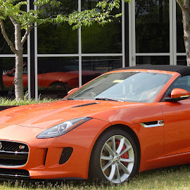 Jaguar F-type by Alma Vargas - Transportation Automobiles ( luxury, jaguar, car, orange, museum,  )