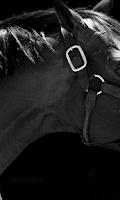 Screenshot of Horse 3d Wallpapers