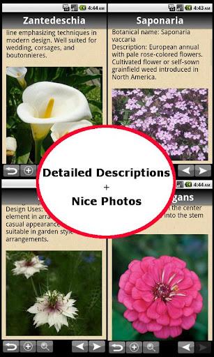 Flowers Bible