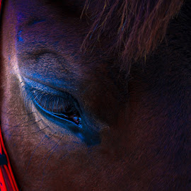 Horse by Teck Keong Chu - Animals Horses ( eye )