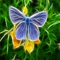 lovely Butterfly 12 icon