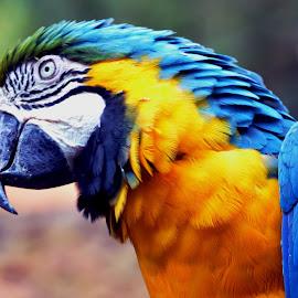 by Edu Yoga - Novices Only Wildlife (  )