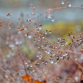 Diamonds of Nature by Johannes Oehl - Nature Up Close Leaves & Grasses ( plant, water, macro, grass, drops, rain )