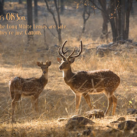 It's OK Son. by Richard Duerksen - Typography Captioned Photos ( ranthambhore, spotted deer, india, deer )