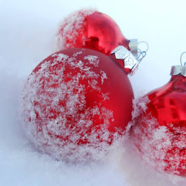 Red Christmas by Megan Polentini - Novices Only Objects & Still Life ( balls, red, winter, christmas )