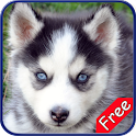 Husky+ Free icon
