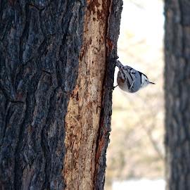 Bird watching  by Catherine Klippenstein - Novices Only Wildlife