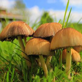 by Sheila Werth - Nature Up Close Mushrooms & Fungi ( sept 17 2014 )