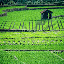 small house by Aji Mulyono - Landscapes Prairies, Meadows & Fields (  )