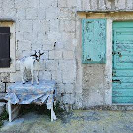 Island of Bisevo by Dubravka Krickic - Buildings & Architecture Homes ( home, old, village, goat, croatia, table,  )