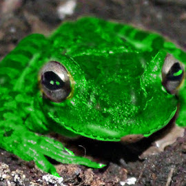 My Fav Martian's Frog by Cheryl Beaudoin - Illustration Animals ( creature, frog, pet, green, fun, martian,  )