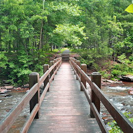 Bridge to Rainbow Falls by Sandy Newfield - Landscapes Forests ( water, wooden, park, creek, state park, forest, bridge, woods, river )