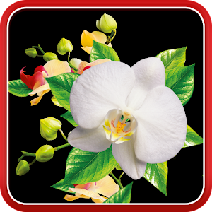 Free play casino wild orchids