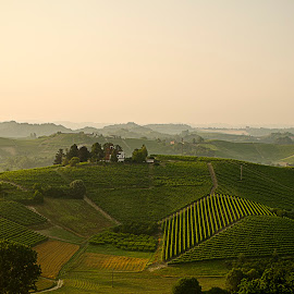 Italian Wine by Irene Carrea - Landscapes Mountains & Hills ( wine, hills, vinegard, view, landscape, italy )
