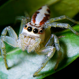 Cute Eyes by Sengkiu Pasaribu - Animals Insects & Spiders