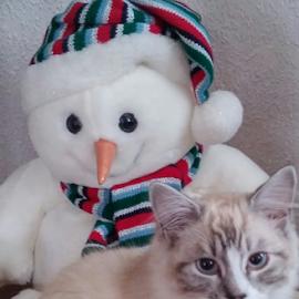 My best friend by Lyz Amer - Animals - Cats Kittens ( kitten )