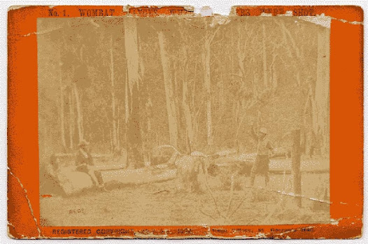 Wombat Ranges where the police were shot. This photograph taken by photographers Burman and Madeley, is one of a series of prints of what came to be known as 'Kelly country', it was used in Kelly's trial to set the scene at Stringy Bark Creek. Later doubts as to the accuracy of the scene (leading to reconstructions) were perhaps stimulated by a sense that it was a fairly unusual piece of evidence to introduce.