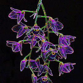 floral by Asif Bora - Digital Art Things