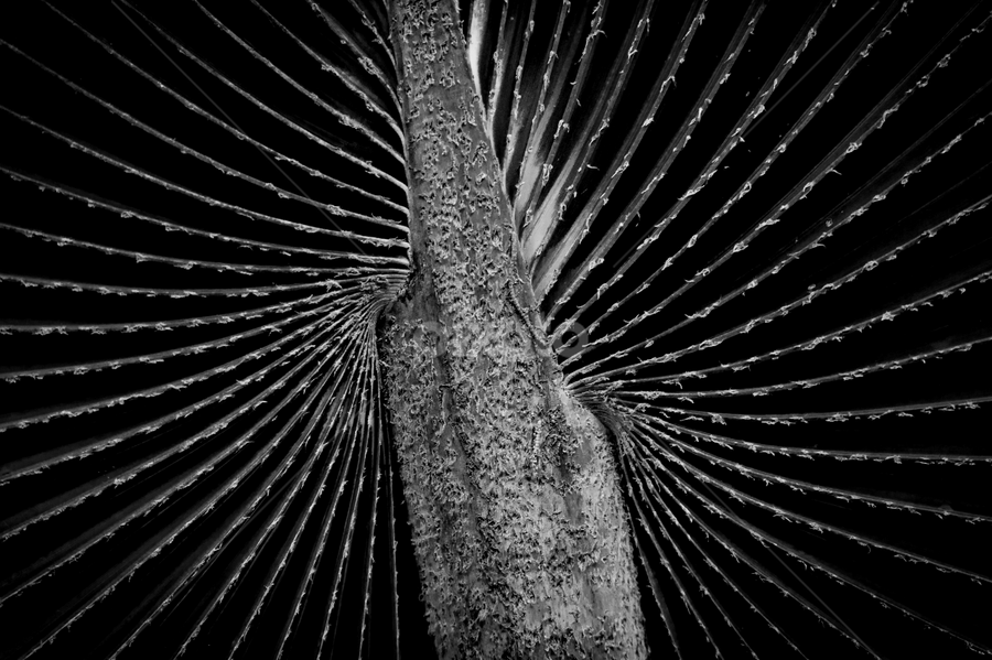 Ferns by Mahdi Hussainmiya - Abstract Patterns ( ferns patterns, black and white, textures, plants, depth, shapes )