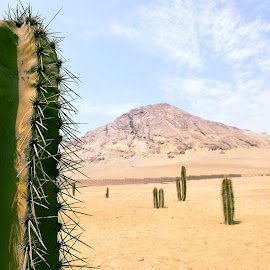 Right here waiting by Amit Zakay - Landscapes Deserts ( signs, desert, landscape, cactus,  )