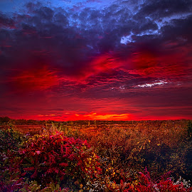 Connecting by Phil Koch - Landscapes Prairies, Meadows & Fields ( vertical, bench, blue   sky, fine art, travel, leaves, love, sky, nature, tree, autumn, trail, picnic table, light, flower, twilight, horizon, dawn, outdoors, trees, wild   flowers, floral, wisconsin, ray, landscape, phil koch, sun, photography, path, horizons, clouds, park, green, back light, scenic, morning, ferns, shadows, field, red, color, sunset, fall, meadow, landscapephotography, beam, sunrise, landscapes, hike, mist,  )