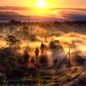Misty Monring by Henry Adam - Landscapes Sunsets & Sunrises (  )