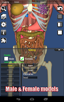 Screenshot of 3D Anatomy Lite