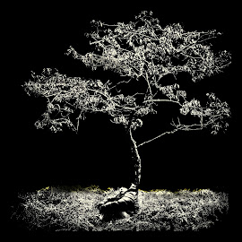 Boy Tree by Rytis Kutkaitis - Digital Art People ( tree, fine art, alone, boy, black&white )