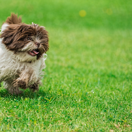 Cookie running by Cristobal Garciaferro Rubio - Animals - Dogs Puppies
