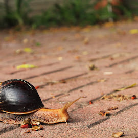 big snail by Heidi Venter - Novices Only Objects & Still Life (  )