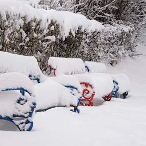 Blue, Red & White by Andreea Alexe - City,  Street & Park  City Parks ( #benches #bushes #covered #in #park #snow #winter, , snow, winter, cold )